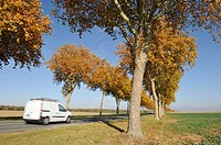 Plane tree-lined road, Eure-et-Loir department, Centre region, France
