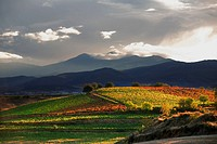 Vineyards near Alesanco, Way of St James, La Rioja, San Lorenzo mountain range, Spain