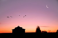 flock of birds flying over tierra de Campos, Medina de Rioseco, Valladolid, Spain