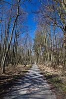 Forest track, Darss Forest near Prerow, Western Pomerania Lagoon Area National Park, Darss, Mecklenburg-Western Pomerania, Germany, Europe