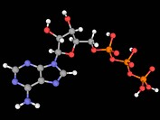 Adenosine triphosphate ATP, molecular model. ATP is a carrier of metabolic energy in cells. Atoms are represented as spheres and are colour_coded: car...