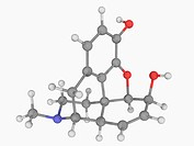 Morphine, molecular model. Potent opiate analgesic drug used to relieve severe or agonizing pain and suffering. Atoms are represented as spheres and a...