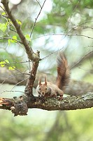 Hokkaido Squirrel Spring