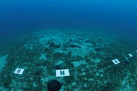 Underwater amphora field, part of the cargo of the wreck of the Uluburun, oldest wreck in the world, the replicas were sunk as they were found, Kas, L...