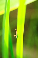 Grasshopper and leaves