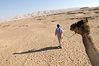 Camel guide, Arabian camel, dromedary (Camelus dromedarius), desert trekking, Dakhla Oasis, Libyan Desert, also known as Western Desert, Sahara, Egypt...