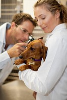 Veterinarians examining dog in kennel