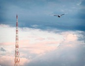 Bird flying towards tower