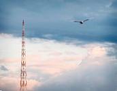 Bird flying towards tower