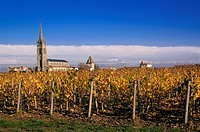 France. Aquitaine. Gironde. Vineyards at Pomerol, one of the famed area, in the Bordeaux wines districts.