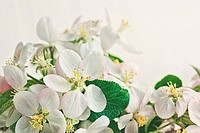 Apple blossoms on soft white background
