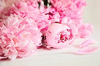 Beautiful pink peony flowers on wood surface