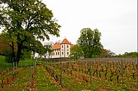 Château d´Allaman, Allaman, canton Vaud, vineyards in front, Switzerland, Europe