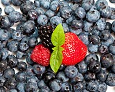 Composition of ripe black and red raspberries, strawberries and backberries