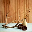 Still life of antlers and a vase with dried flowers
