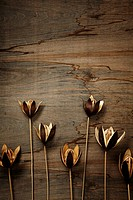 Still life of dried seed pods on wood