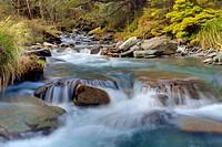 A mountain stream rushing through a beech tree forest