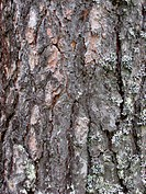 Nature Tree bark texture background