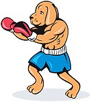 illustration of boxer dog with gloves