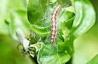 worm in the garden or in green nature