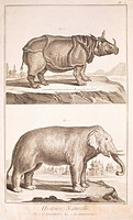 Plate showing rhinoceros and elephant. Engraving from Denis Diderot, Jean Baptiste Le Rond d'Alembert, L'Encyclopedie, 1751-1757. Entitled Histoire Na...
