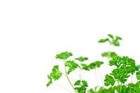 Many chervil springs against a white background