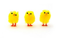 Three yellow easter chicks in a row over white