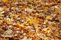 autumn bright dry leaves background