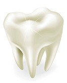 An illustration of a healthy wisdom tooth or molar. Uses gradient mesh