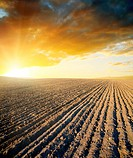 agricultural black field and sunset