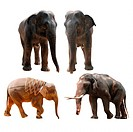 wild animal elephant set collection