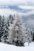 Beautiful winter landscape with trees covered in snow