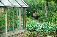 Vegetable garden: beds of potatoes, apples and greenhouse