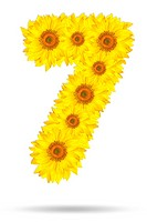 Number seven made of sunflower