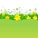 Nature Background With Green Leaves And Narcissuses, Vector Illustration Gradient Mesh