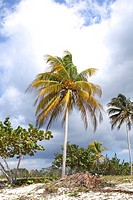 Tropical spot with palm trees against cloudy sky near the ocean in Cuba