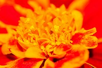 Macro photo of yellow red flower.