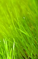 Green grass. Spring, easter background.