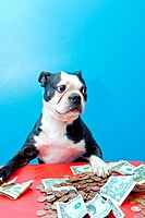 Dog with paws on money on red table