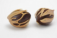 Two Nutmeg isolated on a white background