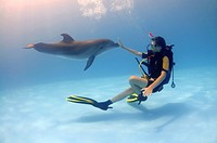 Diver and Bottlenose Dolphin Tursiops truncatus, dolphinarium, Odessa, Ukraine, Europe