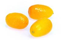 Kumquat 17