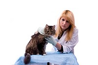 Young girl bringing cat for examination by vet. Pretty Veterinarian and feline subject. Veterinarian have a medical examination a cat. White backgroun...