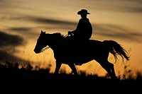 Cowboy riding over the prairie, silhouette at sunset, Saskatchewan, Canada, North America