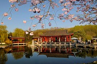Tea house, cherry blossoms in spring in the Garden of the Regained Moon, Chinese Garden, Gardens of the World in the Erholungspark Marzahn park, Berli...