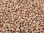 Dried raw pinto beans