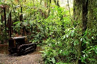 Two_ton Crawler tractor c.1950´s in New Zealand forest