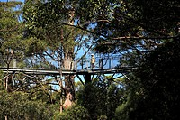 Valley of the Giants tree top walk, Walpole_Nornalup National Park, Western Australia, Australia