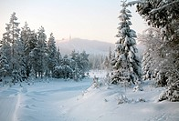 winter forest resort landscape, Ruka, Finland