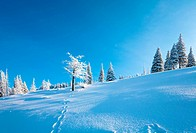 winter time and snow covered fir trees on mountainside on blue sky background
